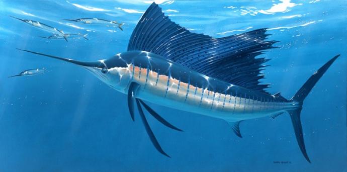 ikan layar